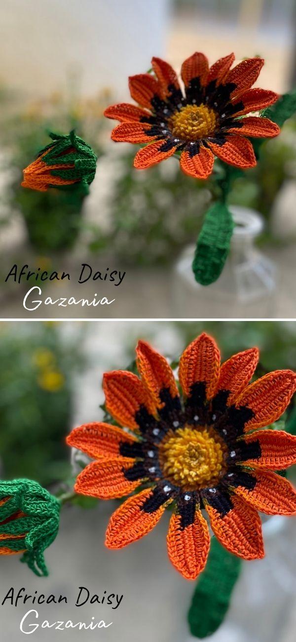 African Daisy Gazania