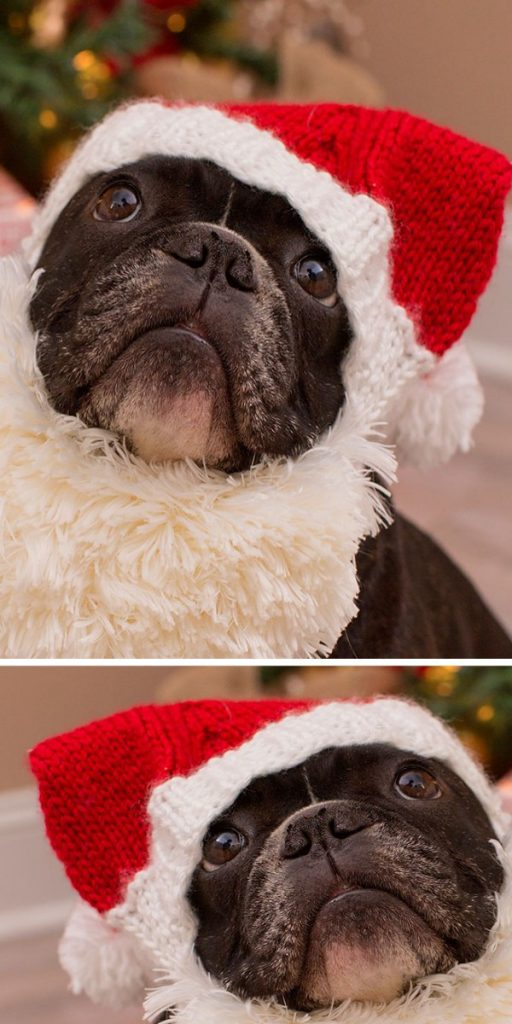 Santa Doggie Knitted Hat Free Pattern