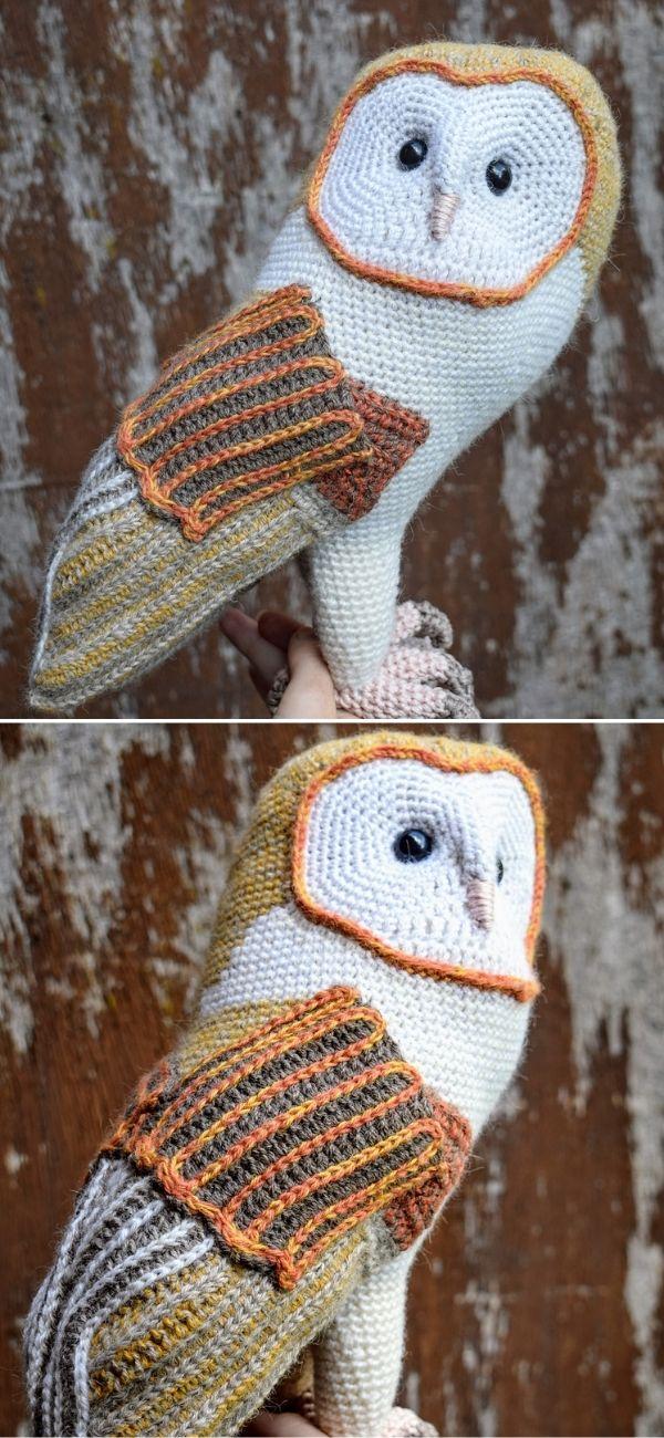 Barn owl CAL | Kerkuil CAL